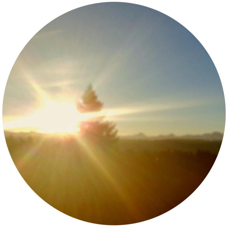 sun in the field